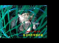 2021년 3월 24일 동삼어촌계 유어장 낚시터 조황입니다.
