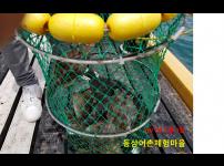 2021년 5월 9일 동삼어촌체험마을 유어장 낚시터 조황입니다.