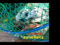 동삼어촌체험마을 유어장 낚시터 3월 26일 조황입니다.
